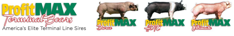 profit-max-terminal-boars